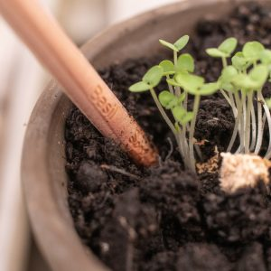 Sprout Pencils WEB