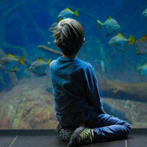 The National Maritime Aquarium Plymouth